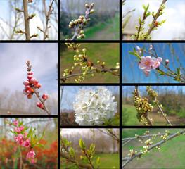 collage piante da frutta