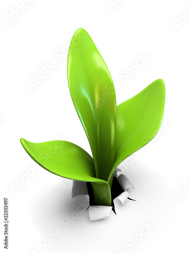 Young sprout isolated on white background