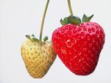 Ripe and unripe strawberry poster