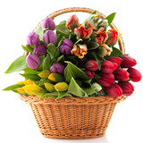 Basket tulips