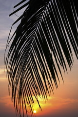 Coconut tree with sunset