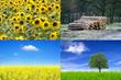 Erneuerbare Energie aus Pflanzen