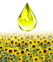 Öltropfen über sonnenblumenfeld