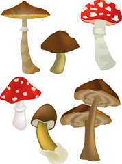 Wood mushrooms