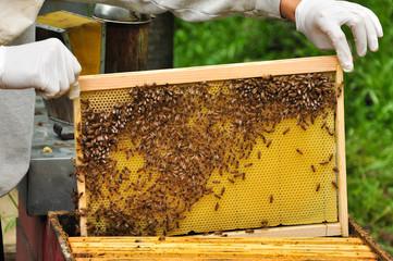 estrarre telaio api 2