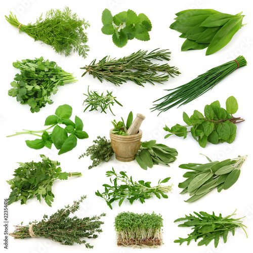 Fresh herbs collection isolated on white background - 22354416