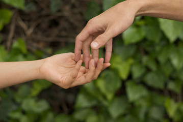Hands of man and woman with bottom of green wall with plants