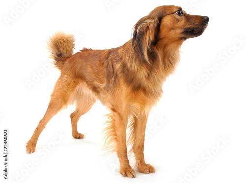 Foxy dog.