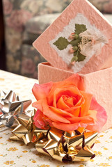 Lovely Peach Rose with Bows and Gift Box