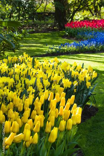 zolte-niebieskie-i-czerwone-wiosenne-kwiaty