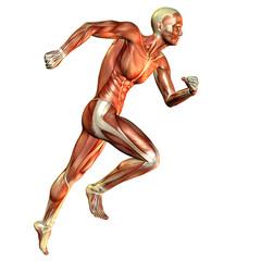 Muskelaufbau Laufstudie Mann