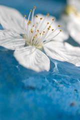 Blüte auf Wasser