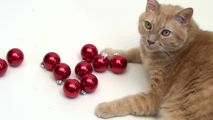 Cat plays with holiday ornaments V2 - HD