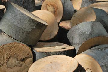 Zersägte Baumstämme