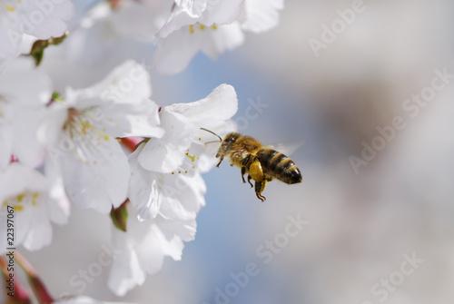 Fotobehang Bee Flying honeybee