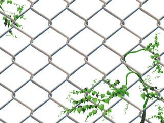 Barbed wire background with creeping ivy