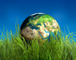 globe on grass
