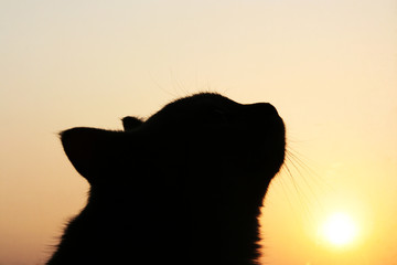 Cat and the sunset