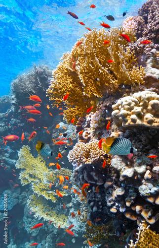 Coral sceny na rafie