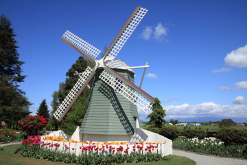 Dutch Style Windmill Surrounded by Tulips