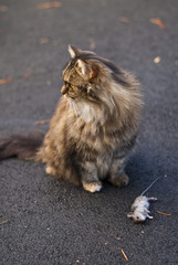 Cat with dead mouse on driveway