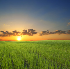 green grass on a background beautiful sunset
