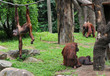 A family of chimpanzees in a grassy field