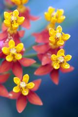 sechs gelbe Blüten