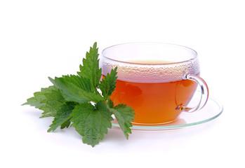 Tee Brennessel - tea nettle 09