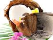 noix de coco ouverte sur feuille de palmier, fond blanc