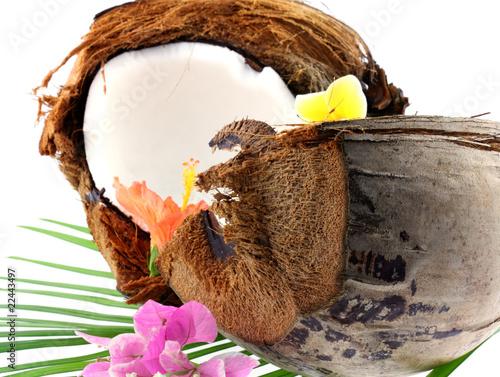 Noix de coco ouverte sur feuille de palmier fond blanc de - Palmier noix de coco ...