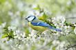Frühling 122