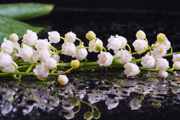 Beautiful Lily of the Valley with reflection and water drops