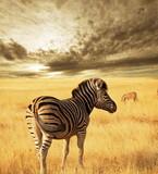 Fototapeta afryka - zwierzęta - Dziki Ssak