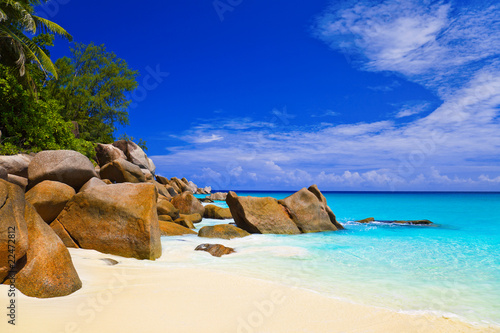 Fototapeten,strand,ozean,sand,baum