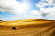 Harvest bales