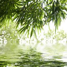 reflektioner av bambu blad