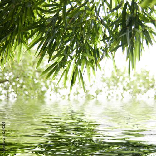 Foto Spatwand Bamboe reflets de feuilles de bambous