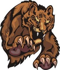 Furious tiger in a jump. Big cats.