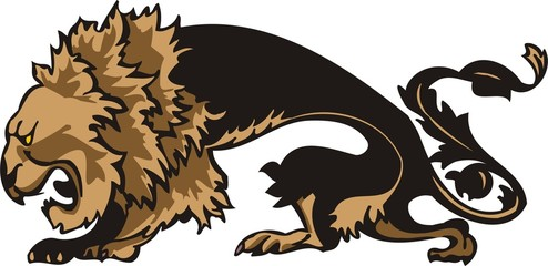 Aggressive walking lion.Big cats.