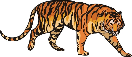 The orange tiger lays. Big cats.