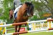 Pferde 113