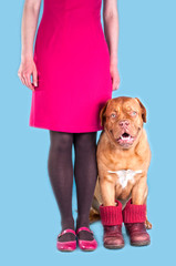 Girl and her dog in purple shoes