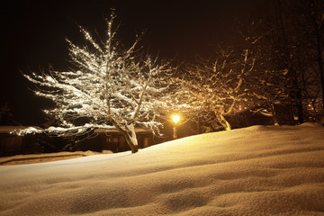 Snow covered trees in Courchevel, Alps, France