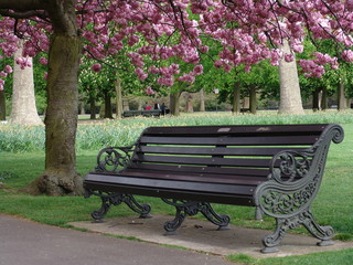 Park bench with pink flowering trees in Greenwich Park