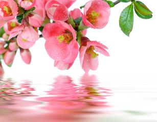 fiori e riflessi