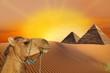 Trip to pyramid