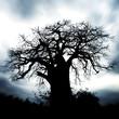 ominous, scary tree
