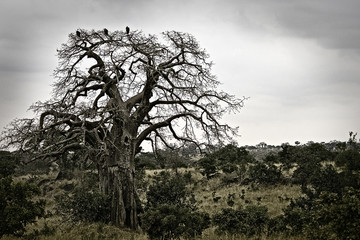 Dark African Scenery