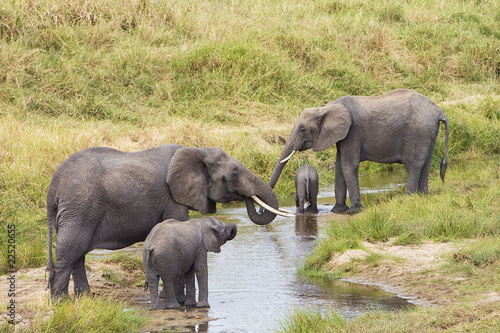 Wild Elephants at Watering Hole